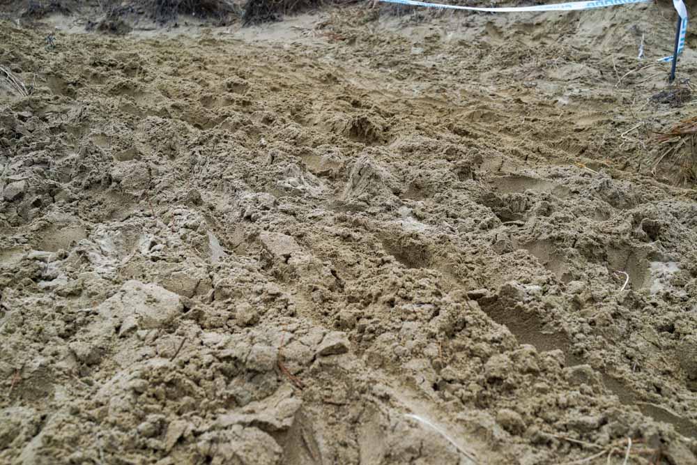この砂の上を走る